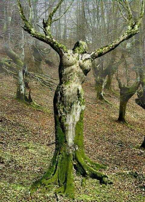 Tree Shaped Like a Woman