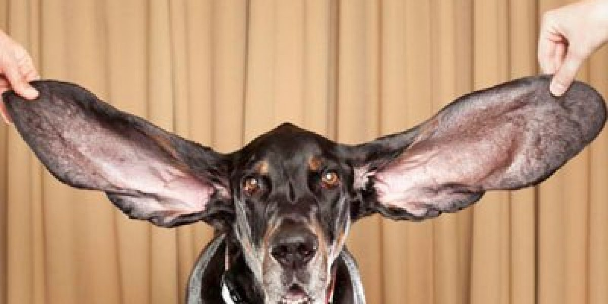 Dog With The Biggest Ears